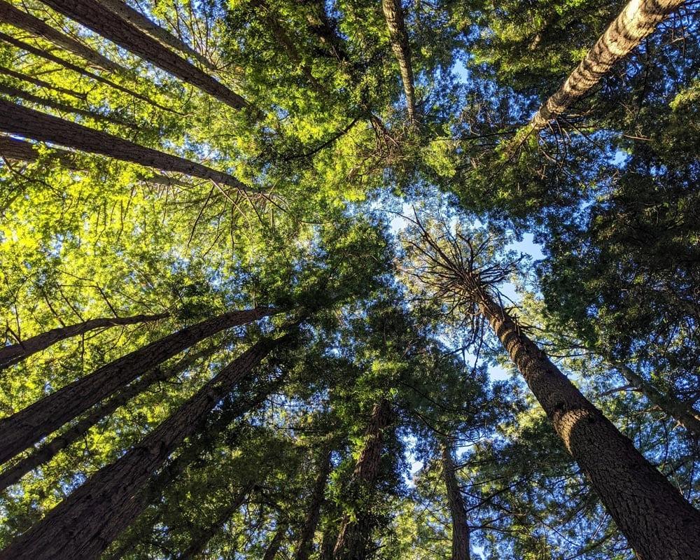 Bomen gefotografeerd met laag camerastandpunt