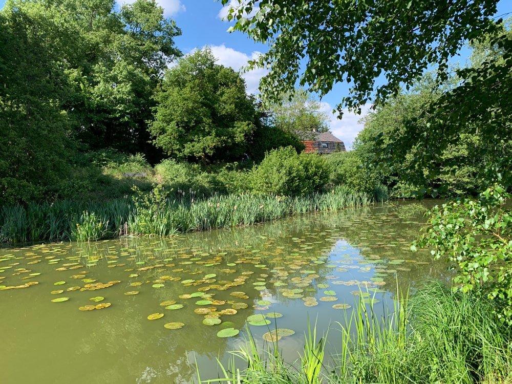 Natuurgebied de Heinis: met vaste camera van de iPhone XR