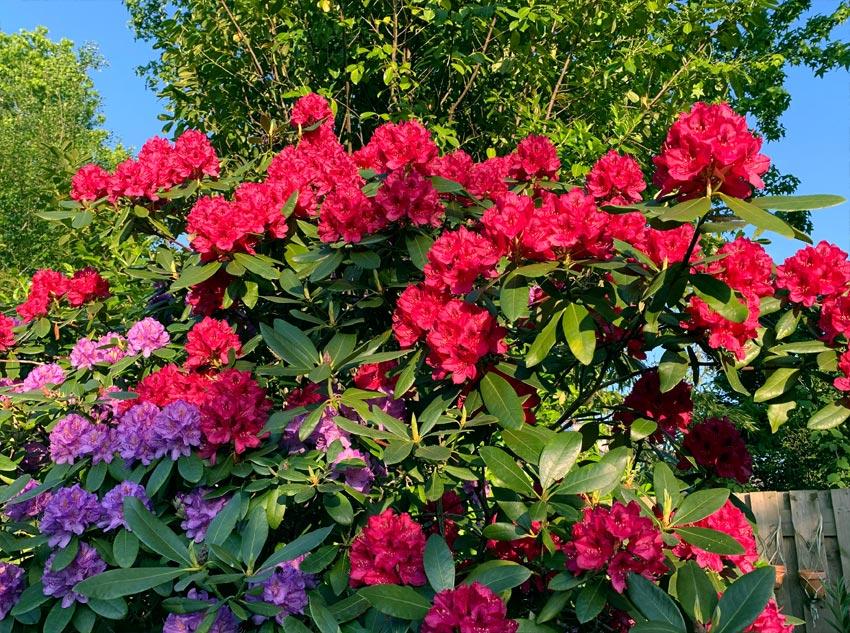 Bloemen in jpg-formaat