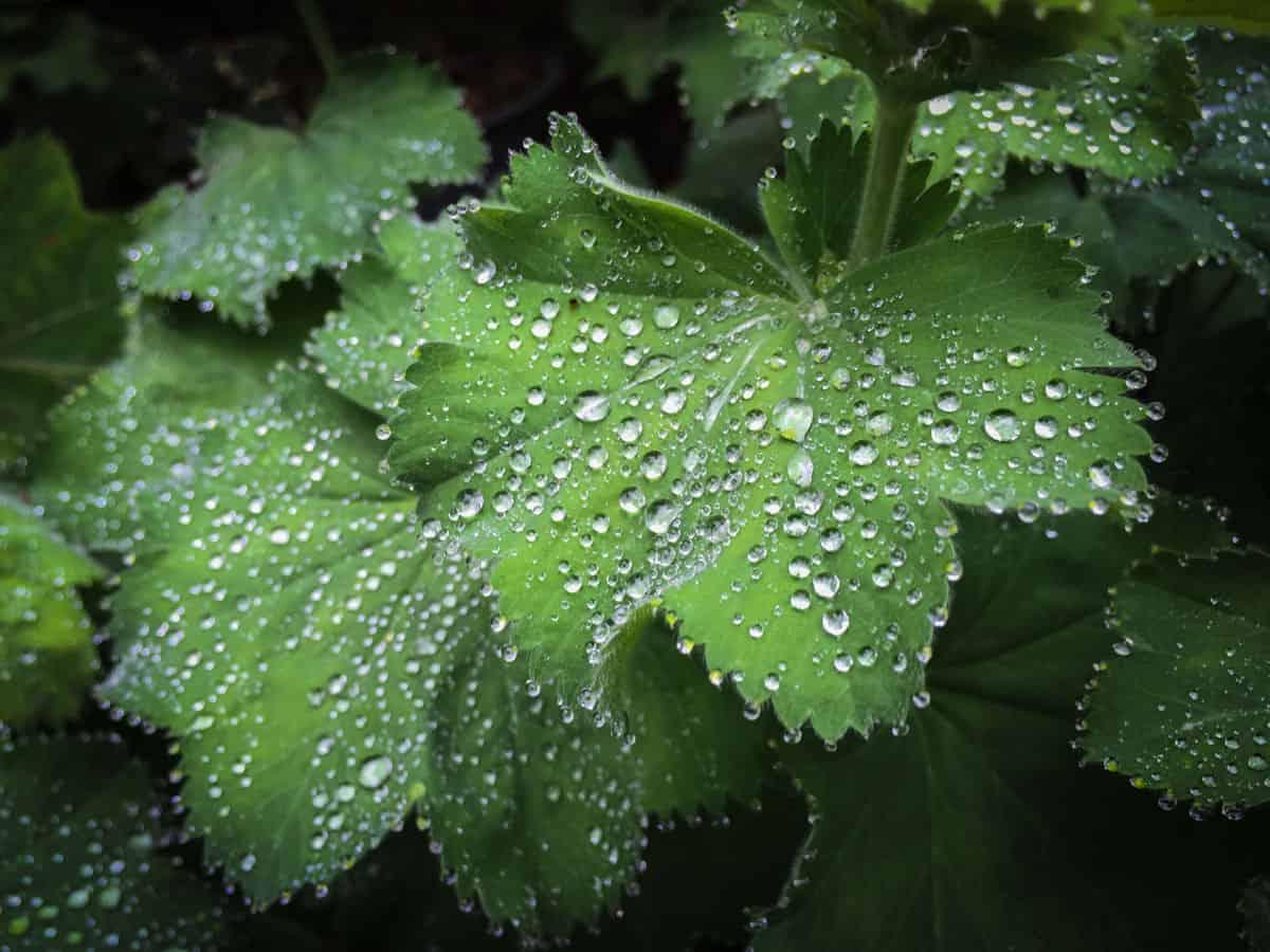 Smartphone fotografie: slimme hack 6: de plantenspuit