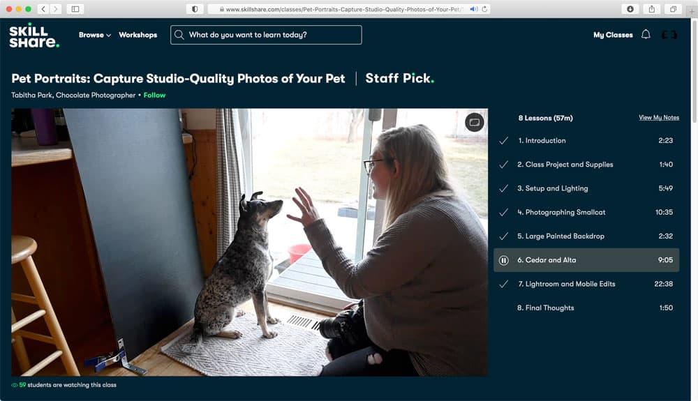 Huisdieren fotograferen cursus